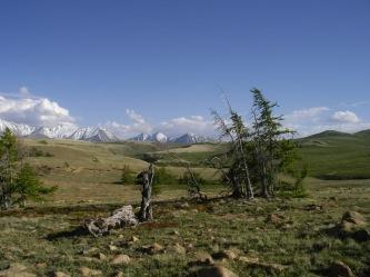 Altai_relict