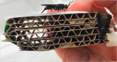 """Ricerca: dagli insetti, """"bioraffinerie"""" per produrre energia, nuovi materiali e compost"""