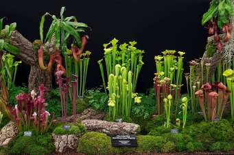 Hampshire-Carnivorous-Plants940x627