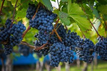 wine-2805848_960_720