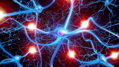 cellule-sinapsi-connessioni
